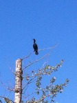 I wonder what kind of bird this is perched 30 feet up...
